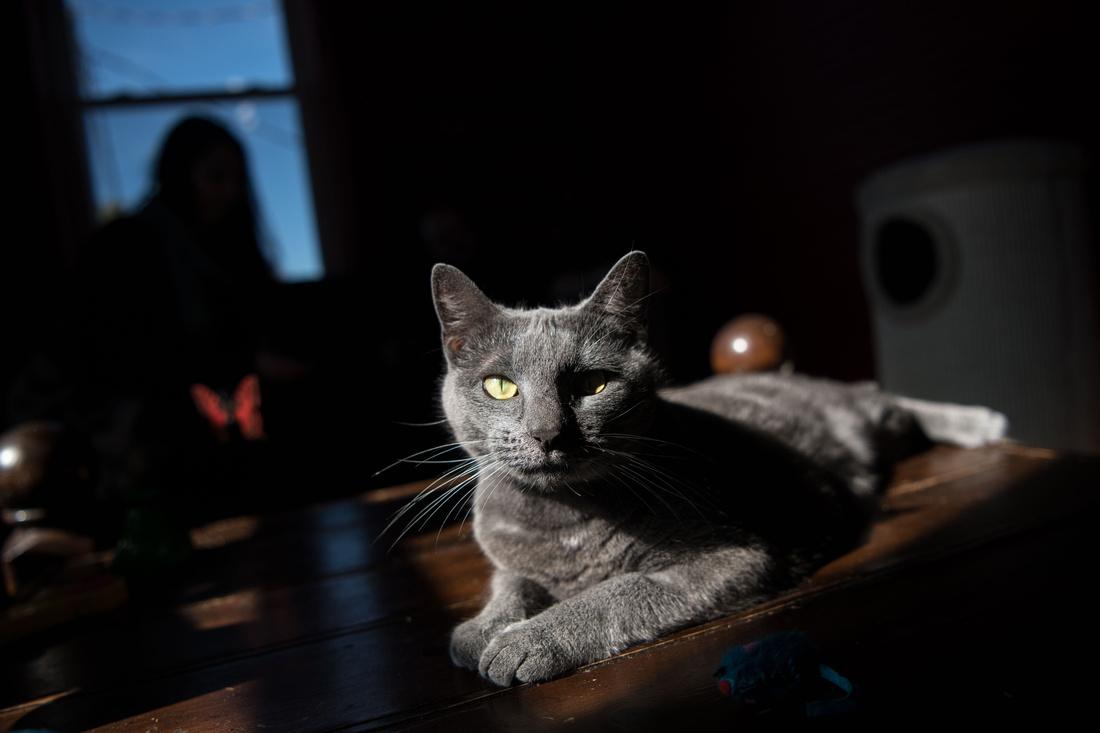 catittude cat cafe west columbia photos 189215