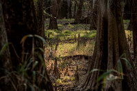 Congaree National Park - Photos
