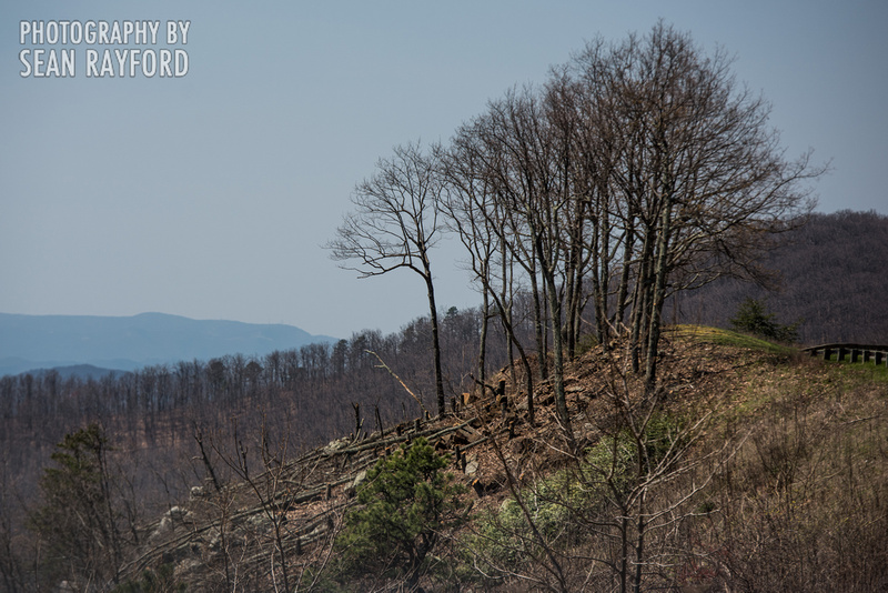 Avoid Pollen Travel blog Blue Ridge Parkway April 4 2016  60966