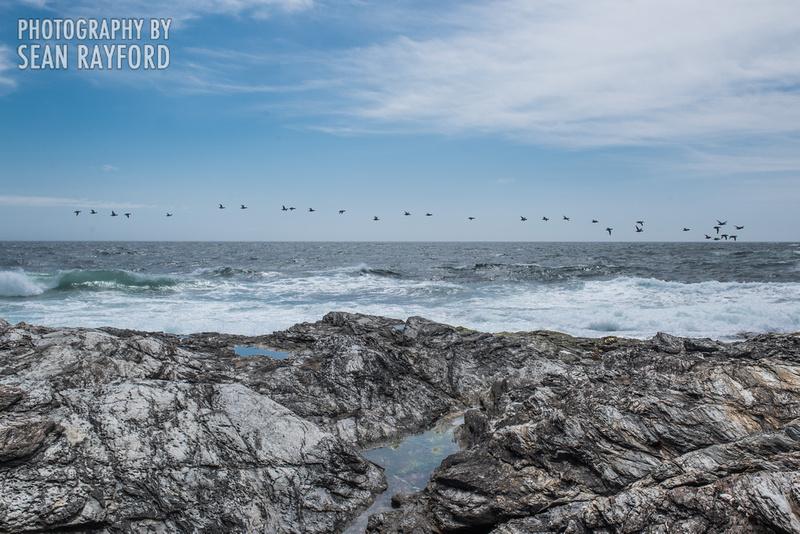 Avoid Pollen Travel blog Rhode Island 2016  58529