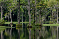 Swamp in Lake View, SC by South Carolina Photojournalist Sean Rayford
