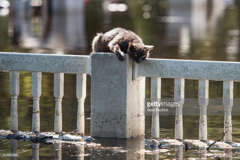 kitty fair bluff South Carolina photographer Sean Rayford
